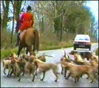 Mounted hunter and hounds on road in front of red car